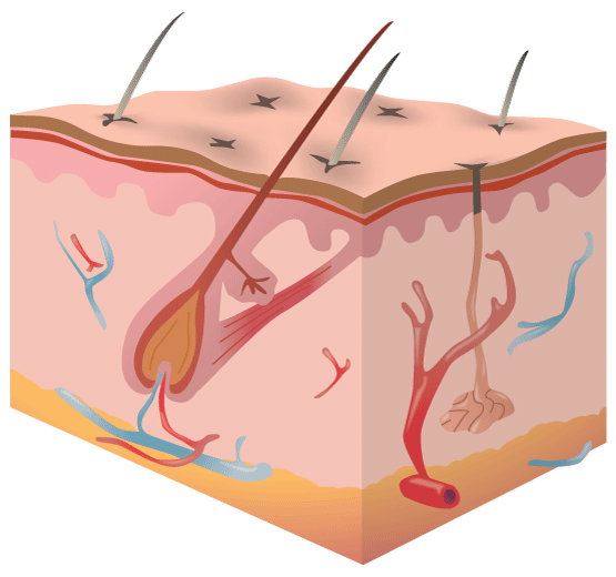 Skin Fragment Diagram